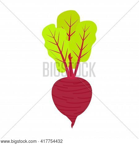 Ripe Burgundy Beetroot With Tops On A White Background. Vector Vegetable