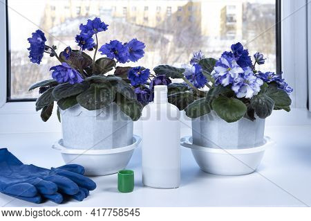 Fertilizing Home Plants. Violets Potted Flowers And Fertilizer In Bottle. Housework And Plants Care