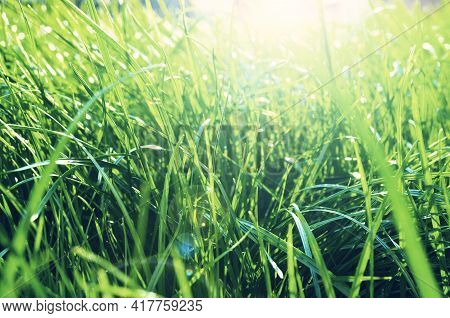 Summer grass background, summer grass field, bright green grass on the summer lawn lit by shining sunbeams. Summer grass landscape, lowest point of shooting, summer grass texture, summer grass meadow ,grass landscape, grass background, grass field