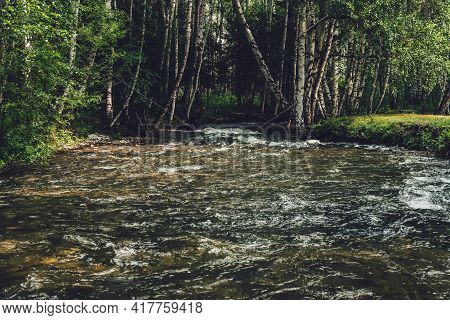 Scenic Landscape With Small River In Birch Grove In Vintage Tones. Atmospheric Forest Scenery With G