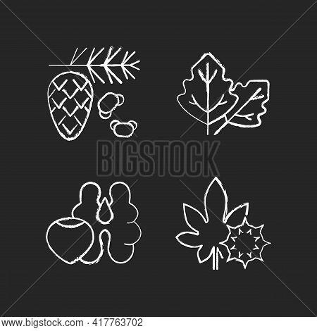 Cause Of Allergic Reaction Chalk White Icons Set On Black Background. Cedar And Pine Tree Pollen. La