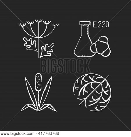 Allergens Chalk White Icons Set On Black Background. Queen Annes Lace. Chemical Sulphites. Dry Tumbl