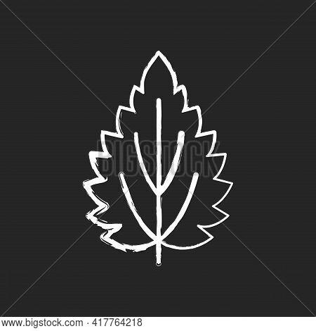 Nettle Chalk White Icon On Black Background. Alternative Medicine. Herbal Ingredient For Homeopathy.