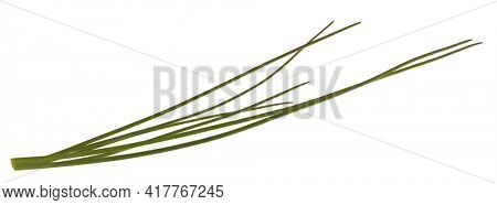 Chives fresh leaves isolated on white background