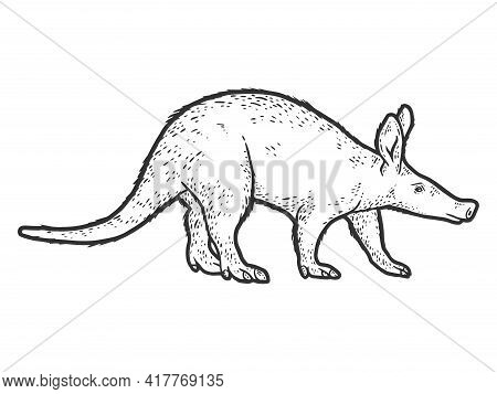 Aardvark, African Animal. Sketch Scratch Board Imitation. Black And White.