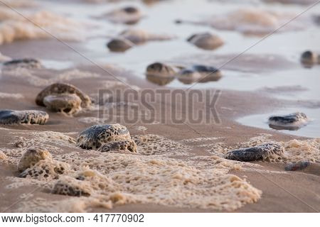 Close-up Of Beach Pebbles With Sea Foam Pattern The Sand. Nature Close Up Abstract Background Image.