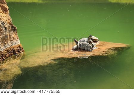 Turtles Chilling In The Sun. Feeling Good