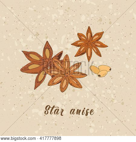 Anise Sketch Illustration In Vintage Style. Star Anise, Spice With Grains On The Background Of Waste
