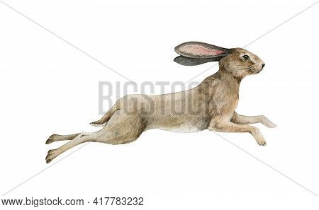 Cute Running Bunny. Small Rabbit Jump Watercolor Illustration. Wild Gray Fluffy Bunny Element. Fores