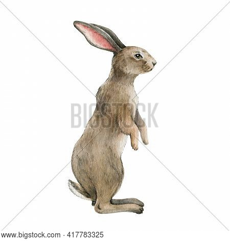Rabbit Animal Watercolor Illustration. Single Bunny Stands On White Background. Cute Small Rabbit Wi