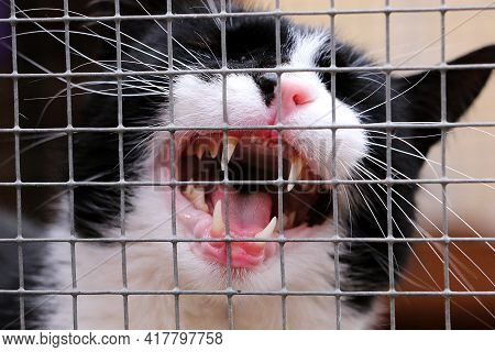 Crying Black And White Cat Behind The Fence In A Cage In The Shelter