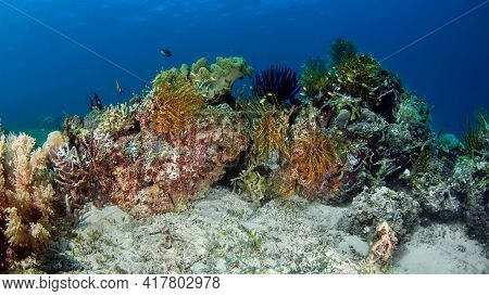 Beautiful, Diverse, Multi-colored Sea Life. On A Blue Background, Various Types Of Hard And Soft Cor