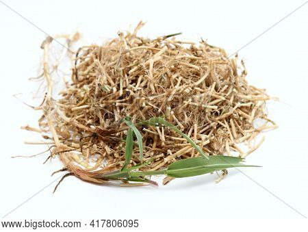 Dried Elytrigia Repens Roots,  Common Weed Called Couch Grass Used In Herbal Medicine. Very Good For