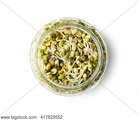 Sprouted green mung beans. Mung sprouts in jar isolated on white background.