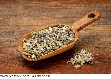 loose leaves of dry sage herb tea in a rustic wooden scoop against weathered wood