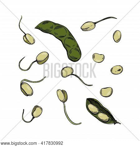 Hand Drawn Soybean Sketch Sprout Plant. Vector Hand Drawn Illustration. Black Outline. Illustration