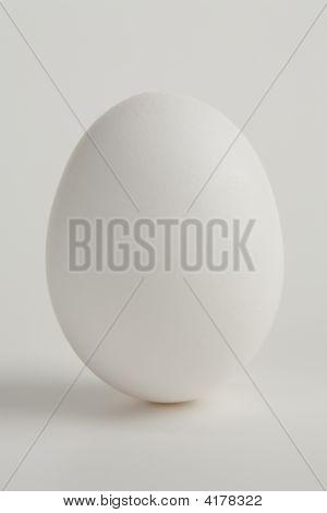 Solo Egg On White Background