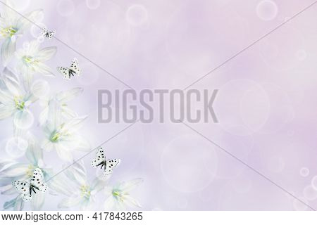 Natural Floral Background Of Snowdrop Flowers And Butterflies With Bokeh Delicate Delightful Romanti