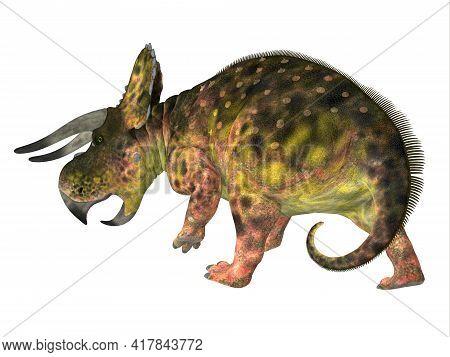 Nasutoceratops Dinosaur Tail 3d Illustration - Nasutoceratops Was A Herbivorous Ceratopsid Dinosaur