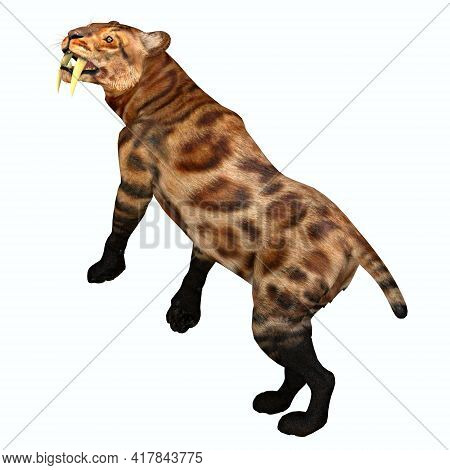 Saber-tooth Cat Tail 3d Illustration - The Saber-tooth Tiger Was A Predatory Cat That Lived In North