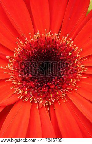 A Vertical Optical Illusion Of A 3d Gerbera Flower.