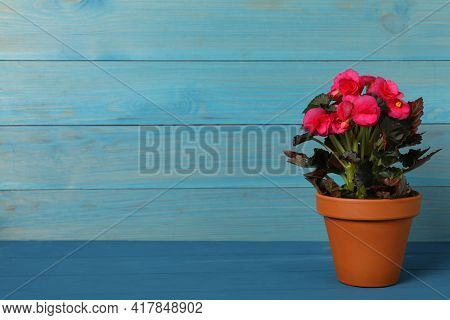 Beautiful Blooming Pelargonium Flower In Pot On Blue Wooden Table, Space For Text