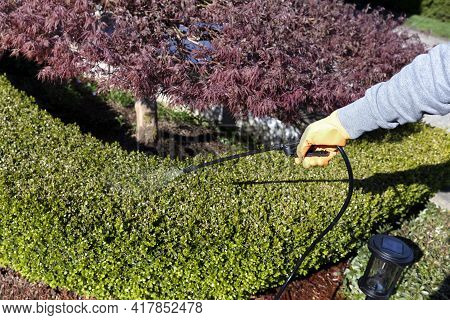 Gloved Hand Using Sprayer Chemicals On Shrubs For Fertilizing, Insecticide And Herbicide Purposes