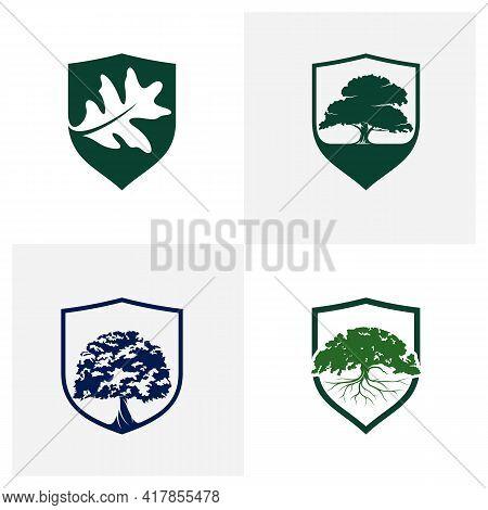 Set Of Shield Oak Leaf Logo Design Vector Illustration, Creative Oak Tree Logo Design Concept Templa