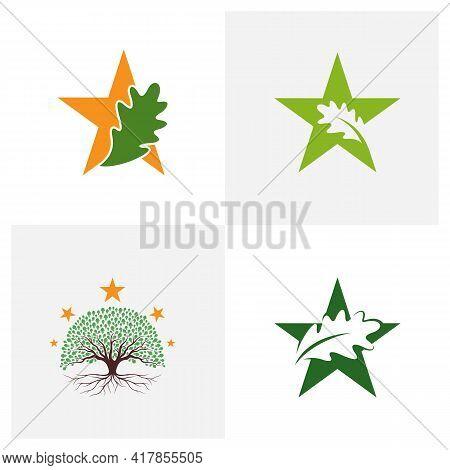 Set Of Star Oak Leaf Logo Design Vector Illustration, Creative Oak Tree Logo Design Concept Template