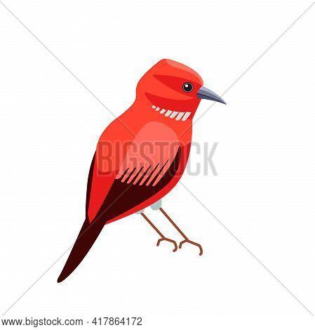 Exotic Red Bird Apapane Hawaiian Honeycreeper. Rare Bird Of The Critically Endangered Apapane Endemi