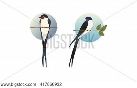Swallow Or Martin As Passerine Bird With Long Tail Perching On Tree Branch Vector Set