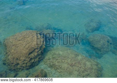 Underwater Stones Near Coastline. There Are Calm Water, Small Fishes, Water Weeds, Some Mussels & Sh