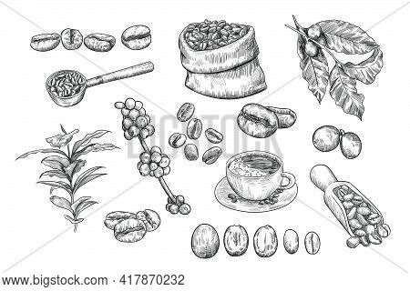 Coffee Beans Sketch Set. Hand Drawn Vector Illustrations Of Jute Sack Or Burlap Bag With Beans, Cup