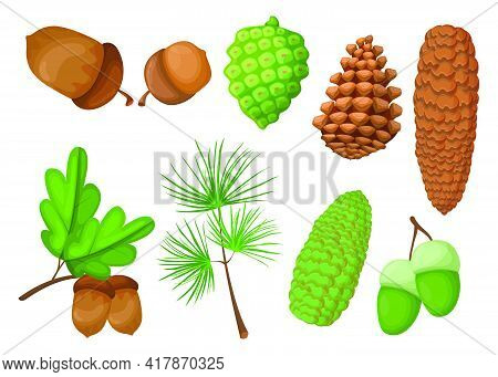 Cones And Acorns Set. Green And Brown Pinecones, Pine Tree Branch, Oak Leaves Isolated On White. Vec