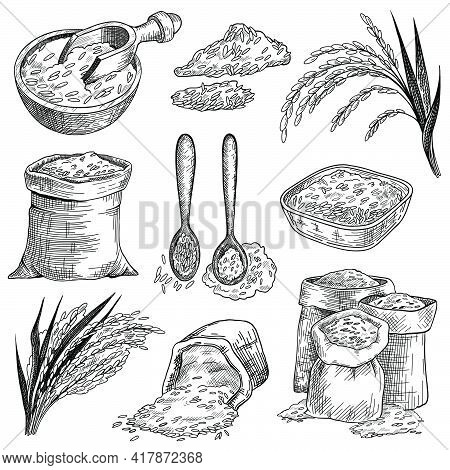 Rice Grain In Sacks And Bowls Sketch Set. Rice Ears Plant Vector Illustration. Hand Drawn Cereal Foo