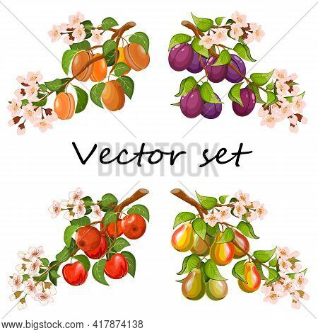 Branches With Fruits In The Illustration.set Of Branches With Apples, Pears, Apricots And Plums In C