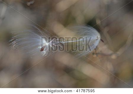 Autumn Silk Fluff