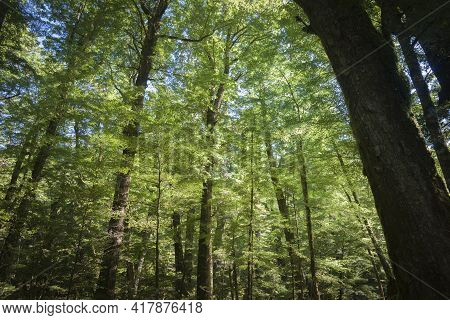 Shadows Of Tree Trunks Contrast With Lime Green Foliage Of Luxuriant New Zealand Native Forest Shado