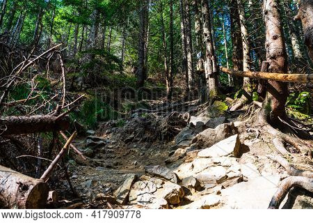 Hiking, View Of Mountain Forest Trail. Sunlights Over A Difficult Trail In Forest