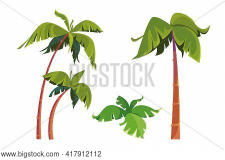 Illustration Of A Set Of Palm Trees. Tall Slender Tree Of The Tropics. The Isolated Object On A Whit