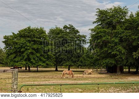 Augusta, Ga Usa - 04 08 21: Horse And Donkey Behind A Fence Grazing In A Field Clear Blue Sky Evenin