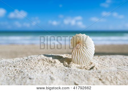 paper nautilus shell  with ocean , beach and seascape, shallow dof