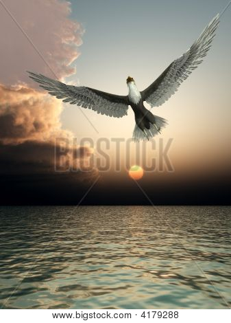 Eagle In Sky