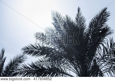 Tropical Tourism Paradise Palms In Sunny Summer Sun Blue Sky. Sun Light Shines Through Leaves Of Pal