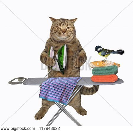 A Beige Cat Irons Clothes Using An Iron On An Ironing Board After Laundry At Home. White Background.