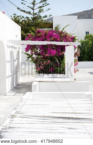 Building Of Hotel In Traditional Greek Style And Bougainvillea Flowers, Santorini Island, Greece