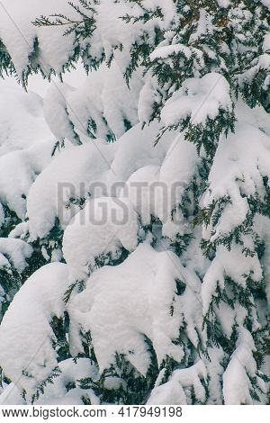 Snow Covered Conifer Tree On A Cold Winter Day. Christmas Tree. Symbol For Christmas And Winter Holi