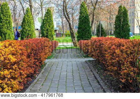 The Spring Landscape Alley Is Paved With Tiles, The Bushes Are Bright Orange, The Thuja Are Green.
