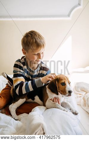 Best Dog Breeds For Kids, Good Family Dogs. Introducing Puppies And Children. Cute Little Beagle Pup
