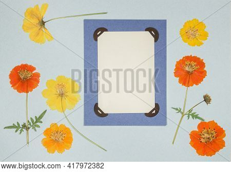 Page From An Old Photo Album. Flowers Cosmos, Cosmea Carpet. Scrapbooking Element Decorated With Lea